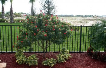 landscaping plants installed by a fence