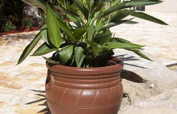 plant in a pot on paver patio